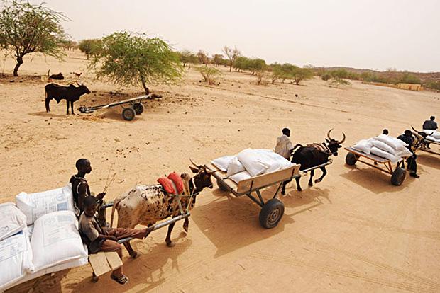 En 2012, environ 17 millions de personnes dans la zone du Sahel ont été confrontées à l'insécurité alimentaire