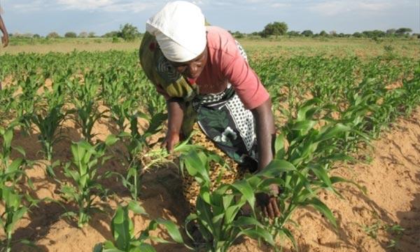 Afrique-Agriculture-