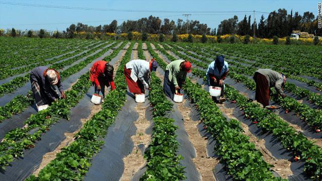 senegal_agriculture